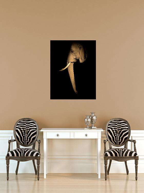 32 X 48 Canvas<br /> Elephant<br /> <br /> <br /> templates by: www.arianafalerni.com