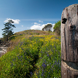 Old Tree Snag, Yellow Island, San Juan Islands, Washington, US