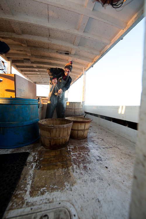 Chris Shipley measures crabs before placing them in the baskets. If the crab is too small, they will throw it back into the bay. | October 11, 2015