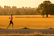 UNITED KINGDOM, London: 04 August 2015 A Londoner takes an early morning run through Richmond Park during sunrise this morning. After a day of sunshine today, it is set to rain tomorrow. Rick Findler / Story Picture Agency