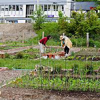 Bosnian Seniors New Horizons Community Garden