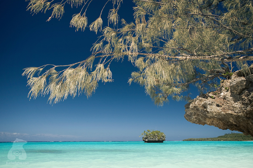 Branches of a 'filao' tree (Casuarina equisetifolia) hang above the turquoise waters of Luengoni beach, on Lifou island, New Caledonia. Lifou is part of the 'Loyalty Islands' group, off the main island of New Caledonia.