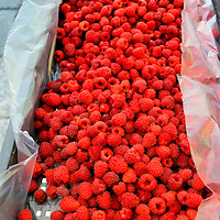 European Raspberries in Box at Outdoor Market in Eger, Hungary <br /> The European raspberry, called rubus idaeus, grows wild in the forests. After its second year, the plant sprouts a five-petal, white flower in the late spring. During the summer and early autumn, the red, sweet yet tart and very delicious fruit ripens. Now for the best part: they are handpicked, gently placed in a box lined with wax paper and rushed to local markets in cities and towns like Eger. Makes you hungry just looking at them, doesn't it?
