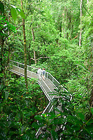 Elevated walkways take visitors through the canopy of the Daintree National Park at the Daintree Discovery Centre.