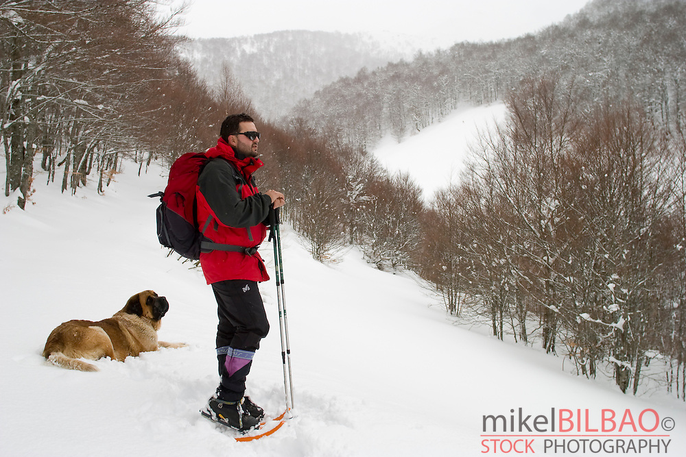 mountaineer with snowshoes and dog in a snow-capped forest moving forward in a slope.<br />