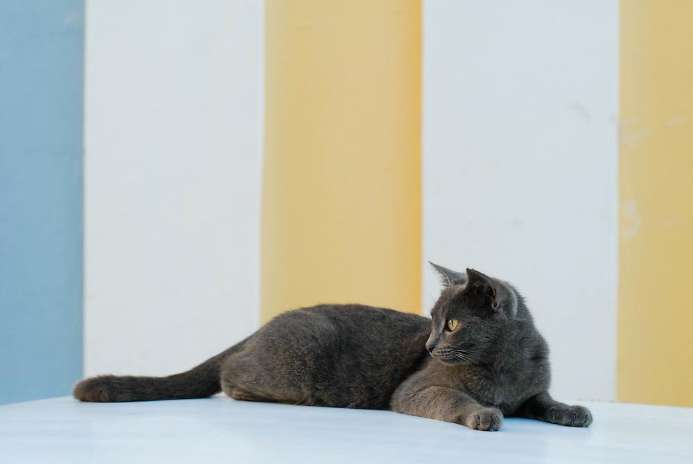 A street cat in Old San Juan, Puerto Rico.