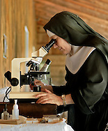 BETHLEHEM, CT- 11 OCTOBER 2005-Mother Noella Marcellino of the Abbey of Regina Laudis  looks at fungi, on a 6 day old Bethlehem Cheese, through a botany microscope. Mother Noella has won international acclaim for her cheese making. She received a doctorate in microbiology from the University of Connecticut and also was awarded a Fulbright scholarship to go to France to study native fungus strains.    <br /> (Photo by Robert Falcetti)