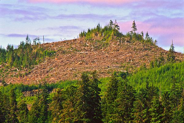 Clear cut forest due to heavy logging on Kupreanof Island near Kake, Alaska.