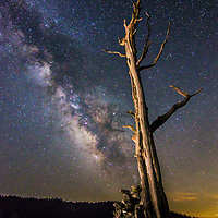 The Milky Way over a stark dead tree in the Sierra Nevada mountains of California.