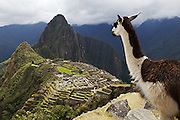 Machu Picchu. Llamas. No surprises, but still, quite a view after an exhausting three-day hike along the Inca Trail.