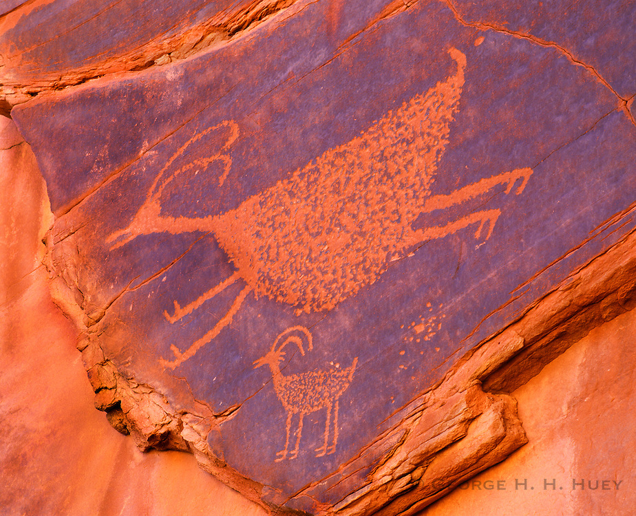 0195-1000 ~ Copyright:  George H. H. Huey ~ Anasazi culture petroglyph of bighorn sheep.  Navajo Indian Reservation.  Monument Valley, Arizona.