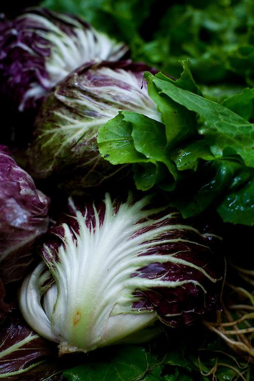 Belo Horizonte_MG, Brasil...80 anos do Mercado Central. Na foto comercio de alface...The 80 years of Mercado Central. In this photo some lettuces...Foto: LEO DRUMOND / NITRO.