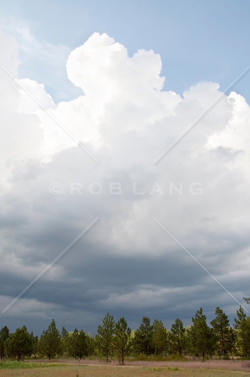 Clouds over pine trees in rural South Carolina