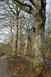 Huizen, Crailo, Noord Holland, Netherlands