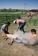 Pine Ridge Sioux Indian Reservation, South Dakota, Oglala Sioux (Lakota) cowboys brand cattle