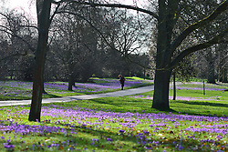 © Licensed to London News Pictures. 21/02/2014. Kew , UK People walk through the spring crocus at Kew Garden's Surrey today 21 February 2014. Photo credit : Stephen Simpson/LNP