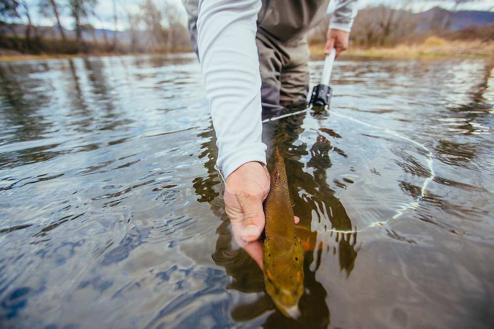 Fly fishing for wild Rainbow Trout and Brown Trout on the Watauga River in North Carolina and Tennessee.