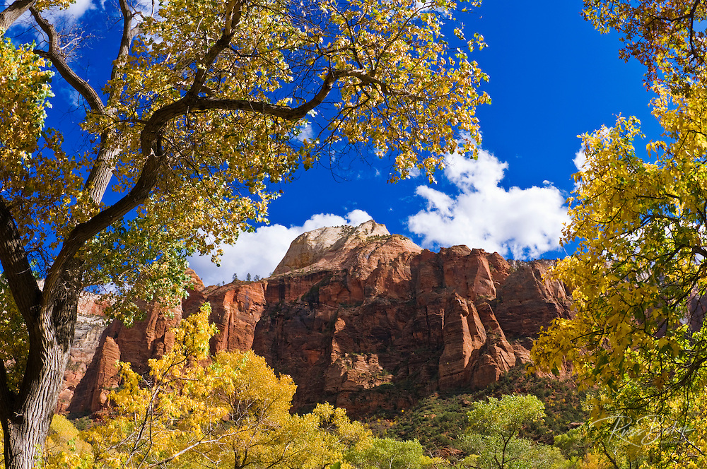 Fall color along the trail to lower Emerald Pools, Zion National Park, Utah
