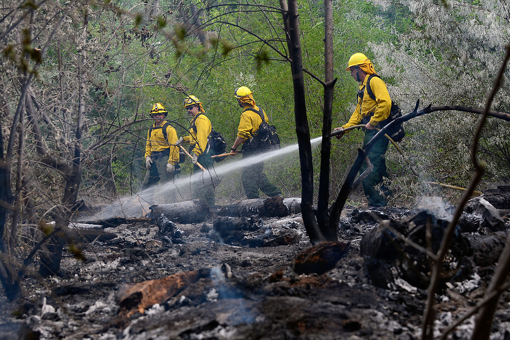 jt060617e/ a sec/jim thompson/ AFD Wildland firefighters hit the hot spots on a bosque fire  Tuesday morning.  AFD is calling it the Tingley Fire is less than a 1/4 acre in size and they have ruled out natural causes. Tuesday June. 06, 2017. (Jim Thompson/Albuquerque Journal)