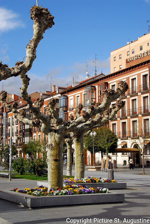 Trees in colorful flower filled planters line a plaza in Valladolid, Spain.