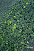 aerial view of tropical rainforest growing around stream, Belize, Central America