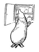 (Mole checking larder- illustration).