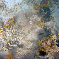 France, Guadeloupe, Iles des Saintes. Coral reef scene of the Caribbean waters near Guadeloupe.