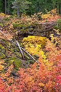 Natural Bridge Interpretive Site, Gifford Pinchot National Forest, Washington.