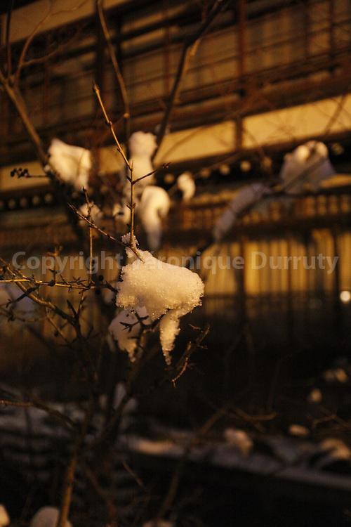 Snow on a little tree, village of Yadanaka, Honshu, Japan / Arbuste enneigé, Yudanaka, Alpes japonaises, Honshu, Japon