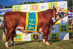 Grande Campeao Gado de Corte da raça Hereford  durante a 38ª Expointer, que ocorrerá entre 29 de agosto e 06 de setembro de 2015 no Parque de Exposições Assis Brasil, em Esteio. FOTO: Vilmar da Rosa/ Agência Preview