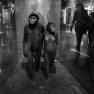 Interpretation of two ancient hominids based on footprints left behind some 3.5 million years ago in eastern Africa.<br /> American Museum of Natural History, New York City.