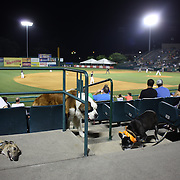 Fans during the 'Bark in the Park' owners with their dogs day at the New Britain Rock Cats Vs Binghamton Mets Minor League Baseball game at New Britain Stadium, New Britain, Connecticut, USA. 2nd July 2014. Photo Tim Clayton