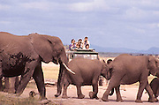 Elephant family, Amboseli National Park, Kenya.