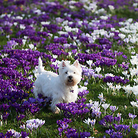 Spring Is In The Air…20.02.17<br />