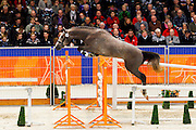 Very Well Semilly<br /> KWPN Hengstenkeuring 2012<br /> © DigiShots