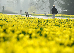 ©London News pictures. 15/03/11. People enjoy the early morning sunshine in Kew Garden's West London this morning (Tues). Picture Credit should read Stephen Simpson/LNP