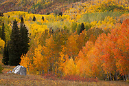 Aspen trees displaying a variety of fall colors in the Rocky Mountains of Colorado. http://www.gettyimages.com/license/694201265