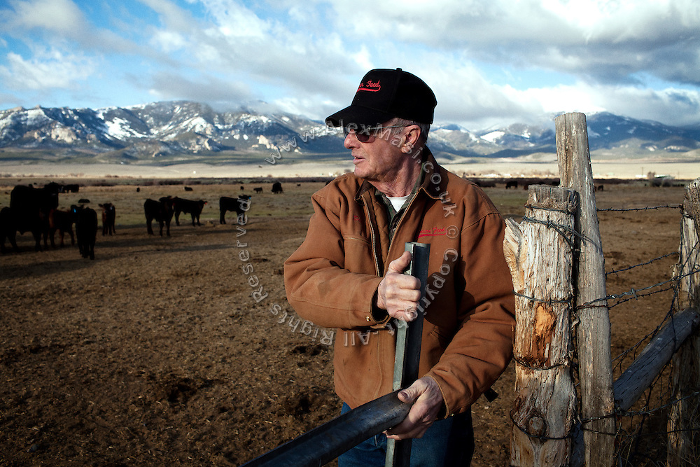 Dean Baker, 72, is visiting cow herds grazing inside his ranch, the largest in Snake Valley, near Baker, Utah, USA. Although opposing South Nevada Water Authority (SNWA) 300-mile water pipeline project, he is one of the very few inhabitants of Snake Valley that is supporting Utah Governor Gary R. Herbert to sign a legal agreement between Utah and Nevada. This document that should protect their future rights and and the local environment, but would also allow for the beginning of the pipeline construction: many people fear that once pumping water, it will not be easily stopped, even if breaching any of the points outlined within the agreement.