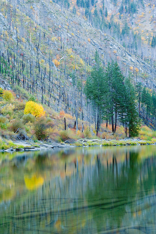 Reflections of trees on Wenatchee river in Tumwater Canyon Washington USA&amp;#xA;<br />
