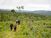 Historielagets tur til Hilmo 17. juni 2017. Vi går fra Henningsdalen til Gulltjønna (ca 10 min) der gammelvegen starter, Så til Lomkjennåsen hvor vi ser på spor etter Kolmile. Derfra til Skørrbergkoia og videre etter gammelvegen mot Nekåbjørg. med stopp ved et fjellmerke der Georg Fredrik von Krogh (1777-1826) har risset inn sine initialer. Vi snur og går vi tilbake til Skørrbergkoia og tar en siste avstikker til Minnetavla og historia om Ola Eggen som bodde i ei tømmerkoie der vinteren 1899/1900 og døde av blindtarmbetennelse februar i 1900. I et trestykke har han skåret ut et ansikt, som er intakt, og er satt opp på tavla. Bålplass til kaffekoking og rast.