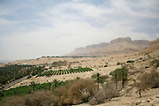 vegetation in desert landscape  dead sea region