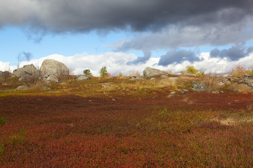 Blueberry fields near Cherryfield, Maine