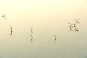 Aquatic vegetatiion in pond<br /> Ear Falls<br /> Ontario<br /> Canada
