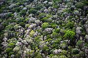 Amazon rainforest 60 miles southwest of Macapá, Brazil.