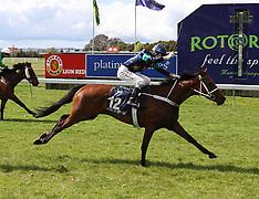 Rotorua-Racing, Rotorua Cup