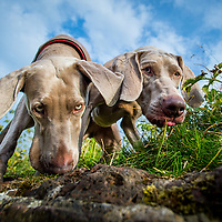 Maisie and Lulu
