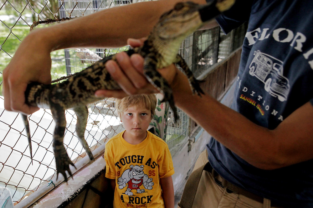 Tourists handle a baby alligator at Gatorama in Palmdale, Fla. With a collapsed hide market, Gatorama has survived on tourism and meat sales. Greg Kahn/Staff