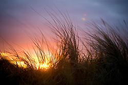 Sunset behind dune grass, Thornham, North Norfolk Coast, England, UK, Europe.