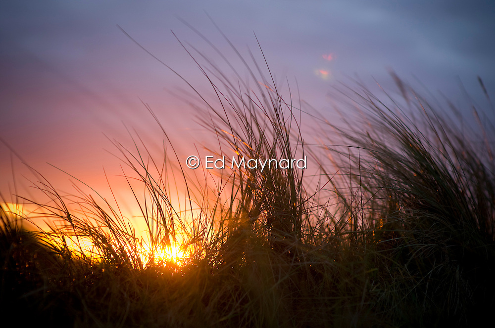 Sunset behind dune grass, Thornham, North Norfolk Coast, England, UK, Europe.