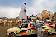 Cairo's Markets